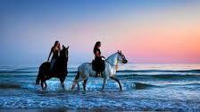 to hvite hest